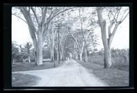 Dirt road in Bethesda, Suriname Leper Colony.