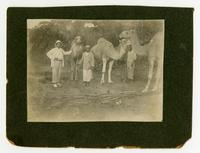 Sheppard with two native men and camels.